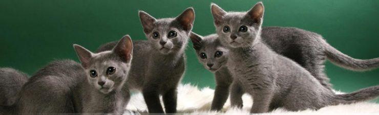 cropped-kitten10.jpg