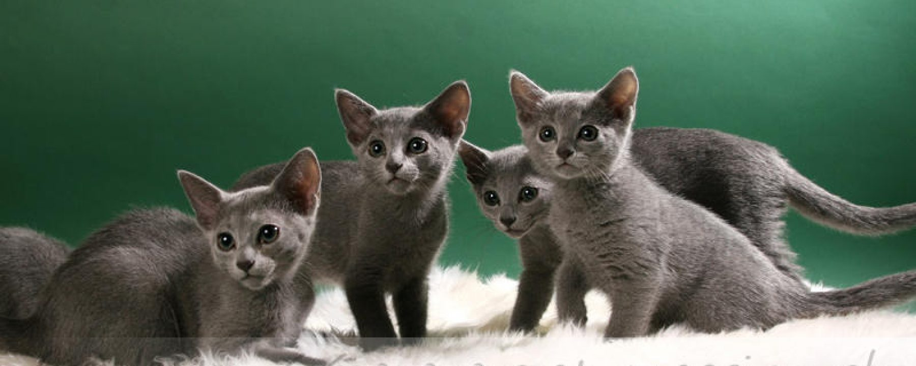 cropped-kitten101.jpg