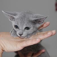 kitty3
