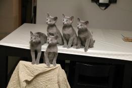 kittyx5